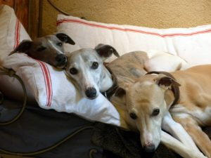 The Whippets